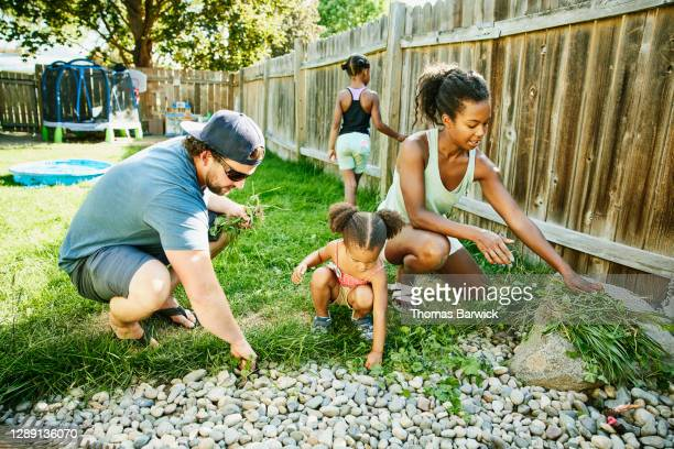 family pulling weeds in backyard garden on summer afternoon - uncultivated stock pictures, royalty-free photos & images
