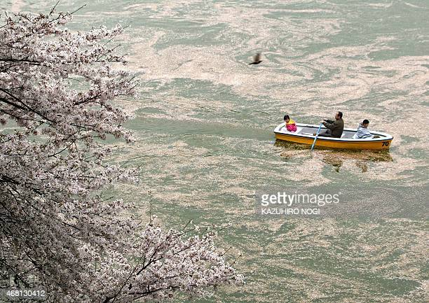 Family rows a boat on a moat surrounding Edo Castle to admire full-bloom cherry blossoms in Tokyo, 04 April 2004. Japanese people all over the...