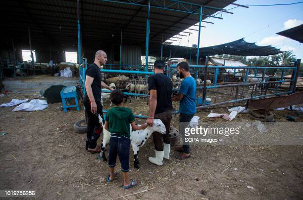 A family seen choosing cattle before Eid alAdha in the east of Jabalya refugee camp Eid alAdha is celebrated throughout the Islamic world as the...