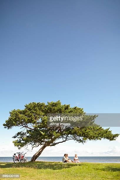 family sitting under tree - faro sweden stock pictures, royalty-free photos & images