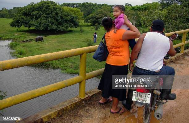 A family stops on a bridge to watch a hippopotamus named Tyson by local residents that was found in a stream at Las Choapas locality in Veracruz...