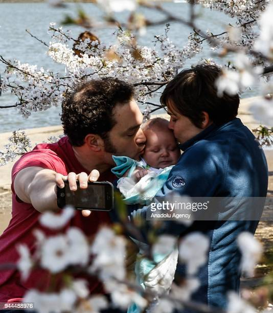 A family takes a selfie with the blooming cherry trees which were sent from Tokyo after it was selected as 'town twinning' in 1912 along the Tidal...