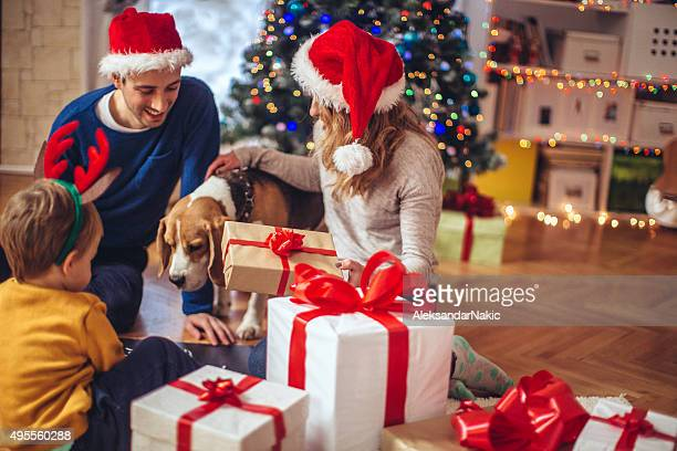 family time is the best gift ever - dog knotted in woman stock pictures, royalty-free photos & images