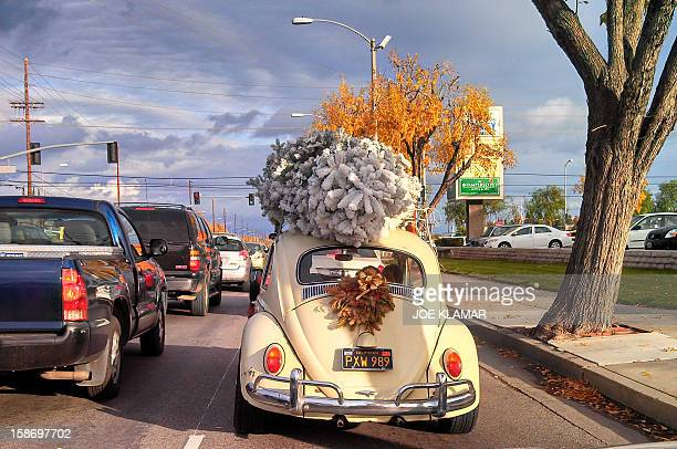 A family transports their newly bought Christmas tree on the top of their vintage Volkswagen Beetle in a residential neighborhood of Woodland Hills...