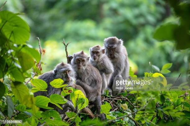 family tree - mammal stock pictures, royalty-free photos & images