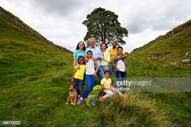 family tree - family tree stock pictures, royalty-free photos & images