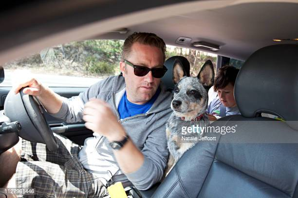 family vacation - dad driving in car on a holiday with pet dog and child in the back seat - australian cattle dog stock pictures, royalty-free photos & images