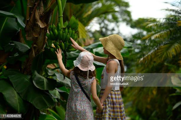 family vacation in a tropical climate - banana tree stock pictures, royalty-free photos & images