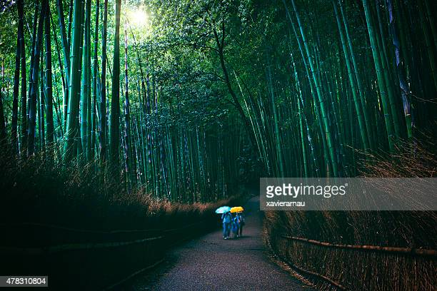Family visiting bamboo forest on a dark rainy day