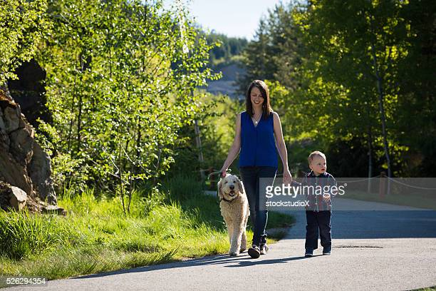 family walk - labradoodle stock photos and pictures