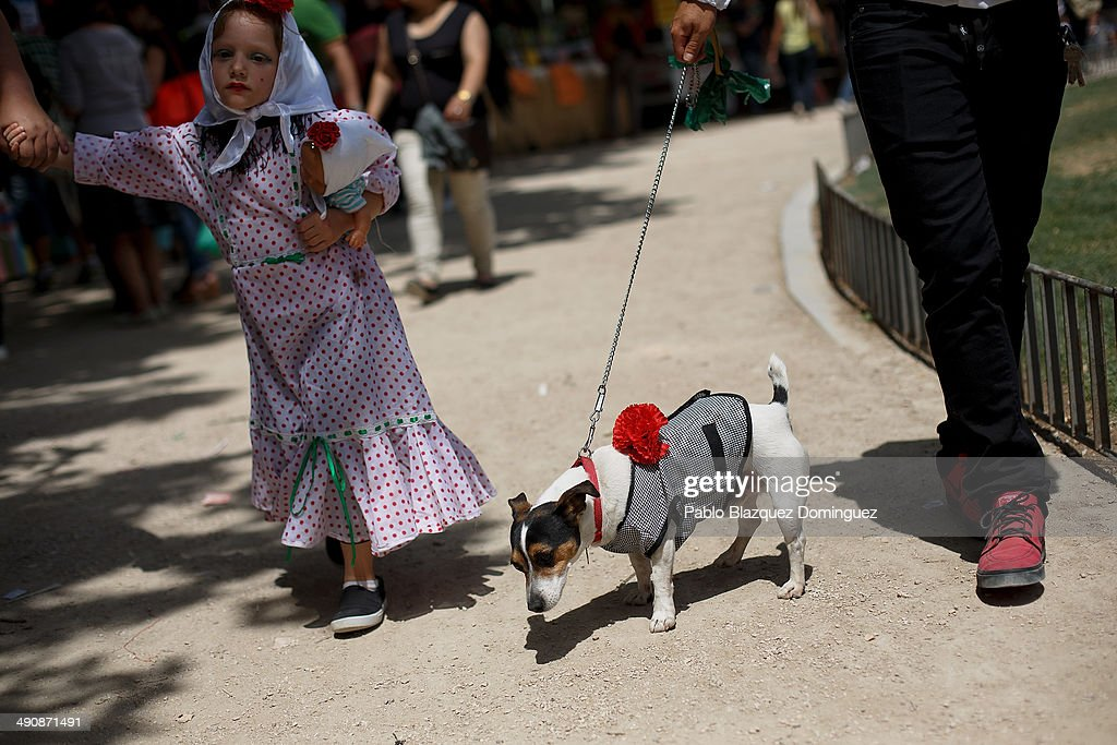 A family walk with their dog dressed as 'chulapo' during the San Isidro festivities at Pradera de San Isidro park on May 15, 2014 in Madrid, Spain. During the festivities in honor of San Isidro Labrador in Madrid revelers take the streets and enjoy music and popular food. Chulapos or Goyescos dance the regional dance known as 'chotis' wearing traditional costumes of Madrid.