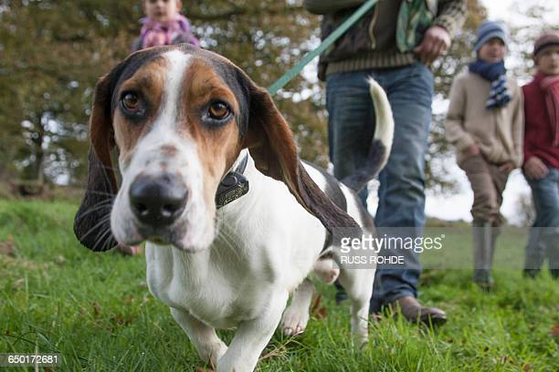 family walking dog in park, low section - basset hound stock pictures, royalty-free photos & images