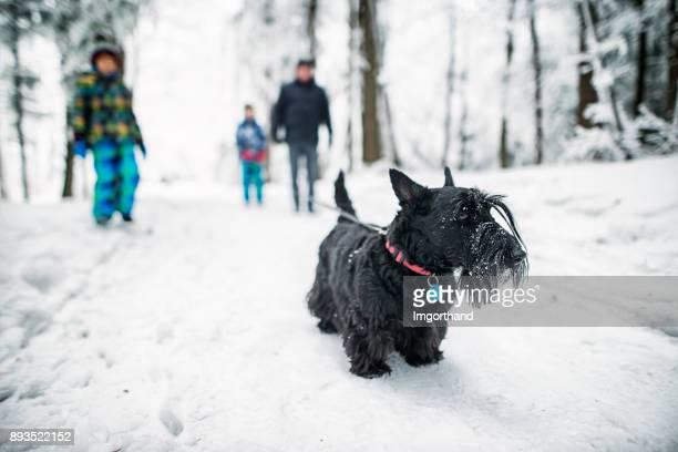 family walking dog in winter forest - winter weather stock photos and pictures
