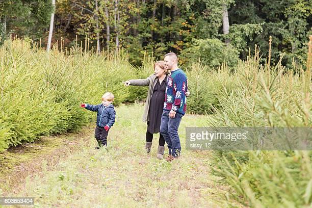 Familia caminando por una arboleda de firs