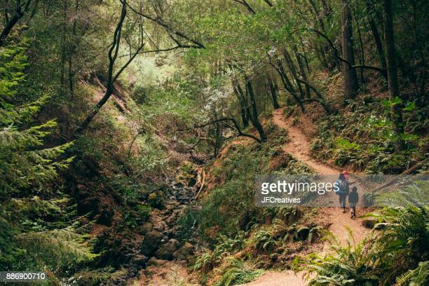 Family walking in forest, Fairfax, California, USA, North America