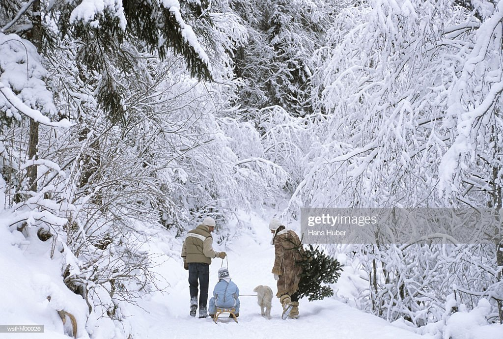 Family walking in snow, rear view : Stock Photo