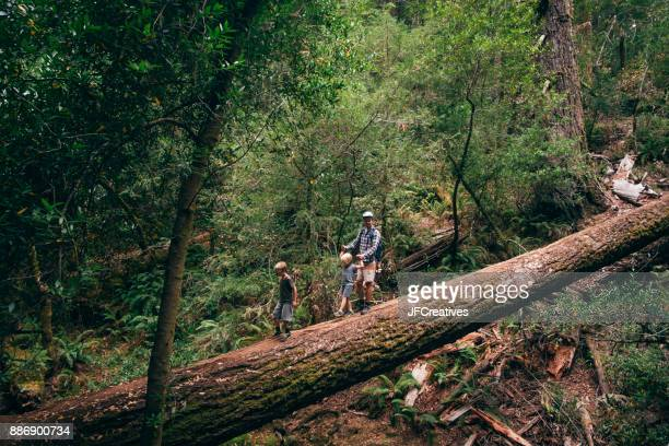 Family walking on fallen tree in forest, Fairfax, California, USA, North America