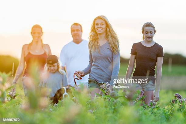 family walking outside at dusk - fat hairy men stock photos and pictures