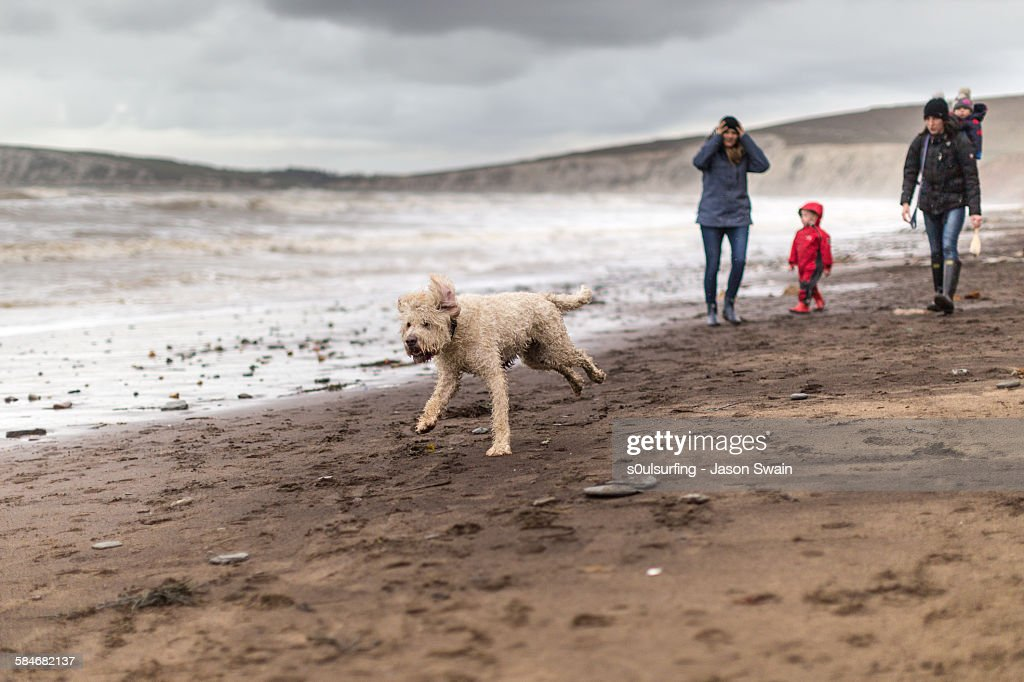 Family Walking the dog on the beach in winter : Stock Photo