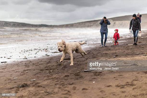 family walking the dog on the beach in winter - s0ulsurfing stock pictures, royalty-free photos & images
