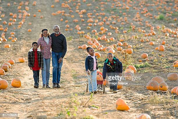 a family walking through a field of pumpkins - pumpkin patch stock photos and pictures