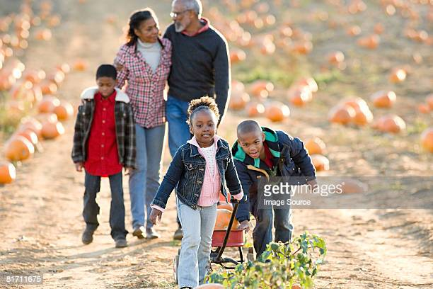 a family walking through a field of pumpkins - toy wagon stock photos and pictures