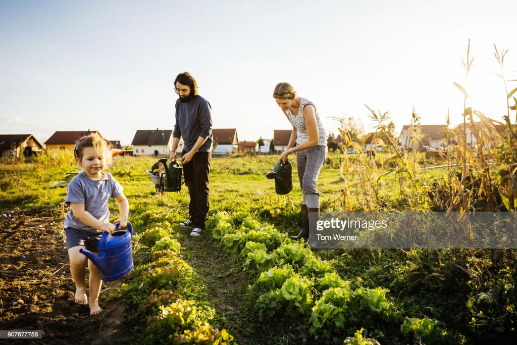 Family Watering Crops By Hand On Urban Farm : Stock-Foto