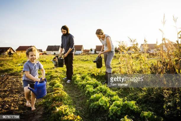 family watering crops by hand on urban farm - umwelt stock-fotos und bilder