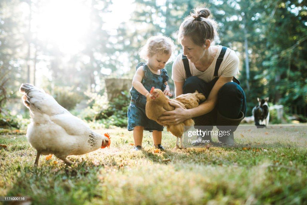 Familie mit Hühnern auf der kleinen Home Farm : Stock-Foto