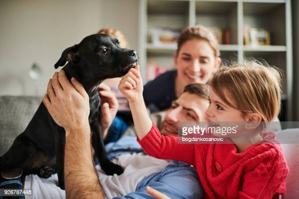 family with children and a dog - pit bull terrier stock photos and pictures