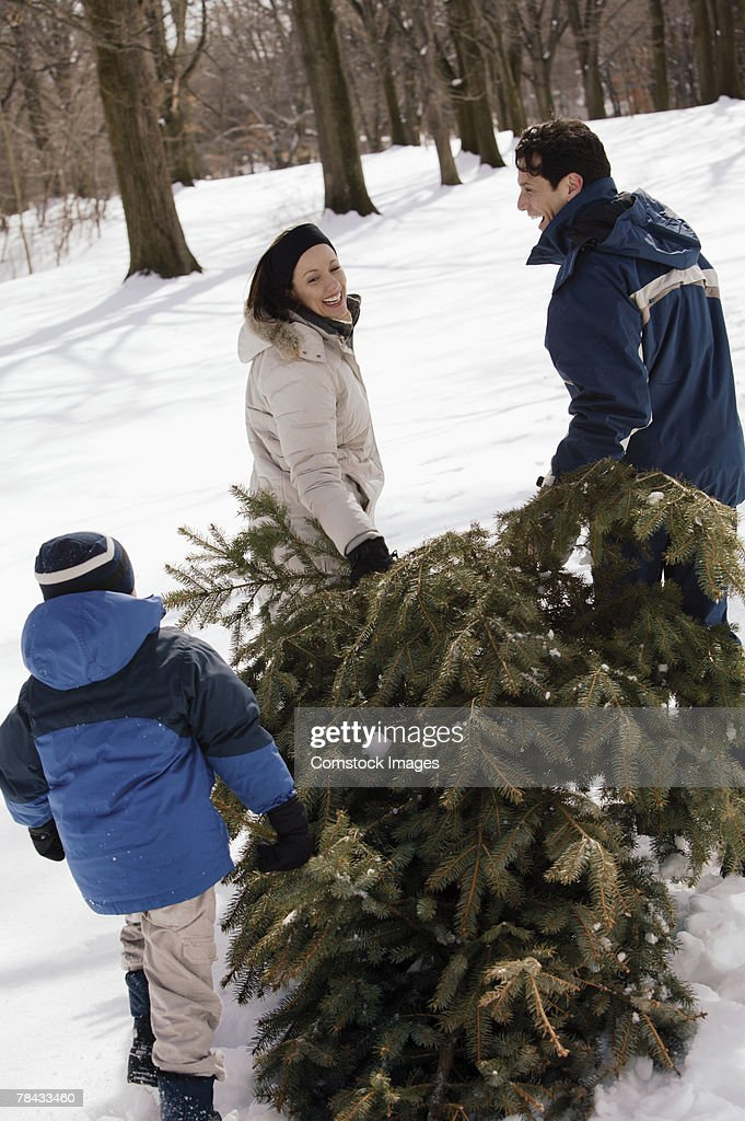 Family with Christmas tree in snow : Stock Photo