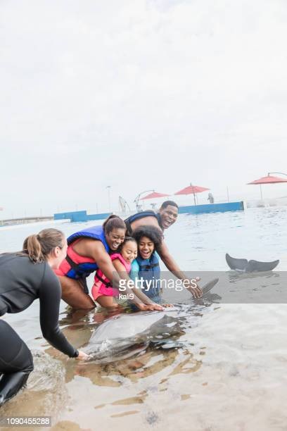 family with dolphin and trainer at marine park - mammal stock pictures, royalty-free photos & images