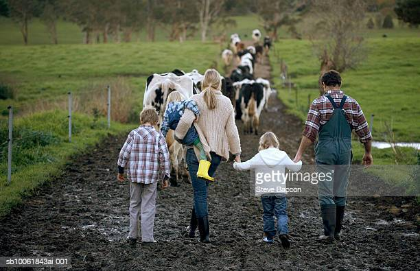 family with three children (3-9) walking on muddy road, cows in background, rear view - quinta imagens e fotografias de stock