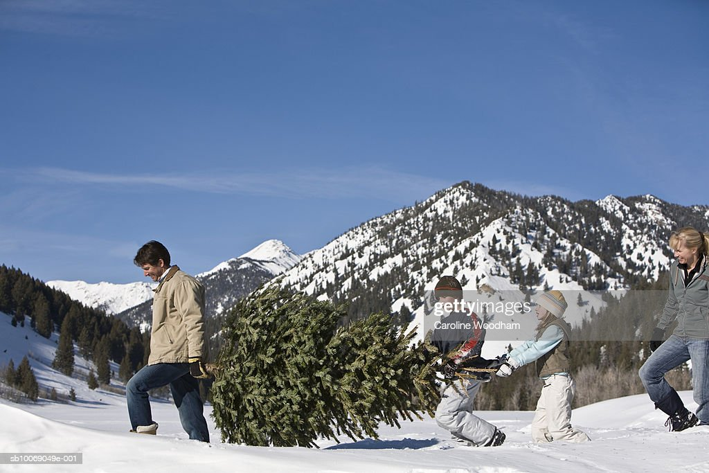 Family with two children (8-10) carrying christmas tree in mountains : Stockfoto