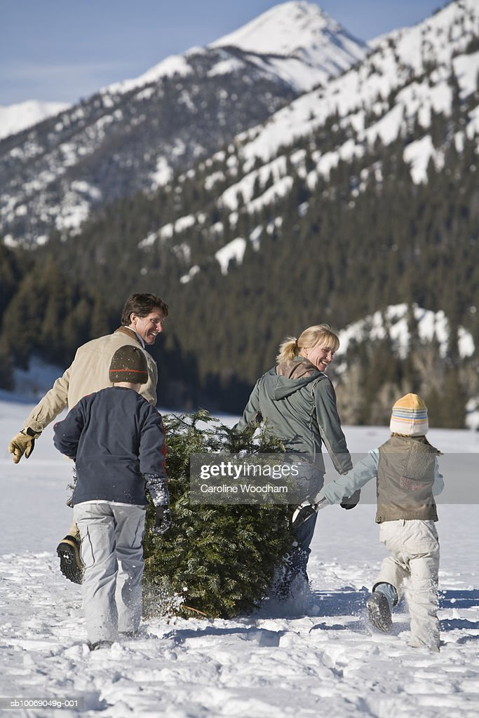 Family with two children (8-10) carrying christmas tree in mountains, rear view : Stockfoto