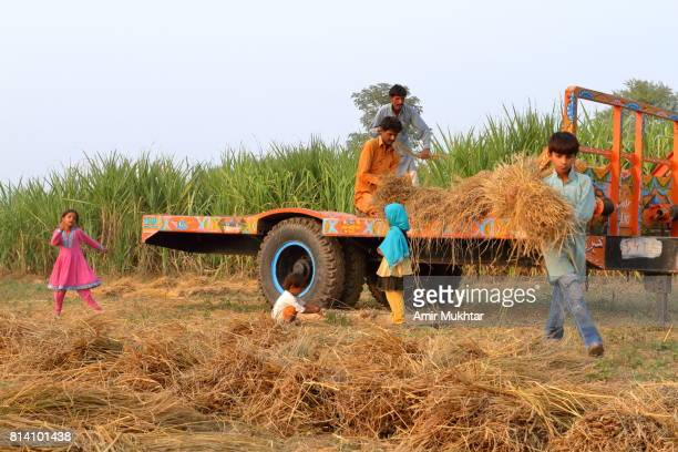 family working in the field - pakistani culture stock photos and pictures