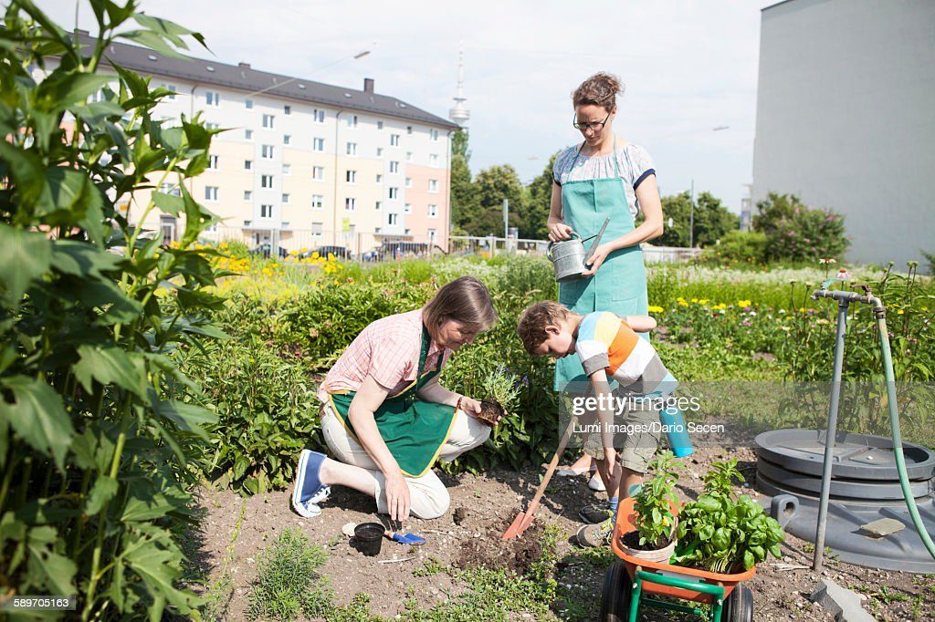 Family working together in vegetable garden : Stock Photo