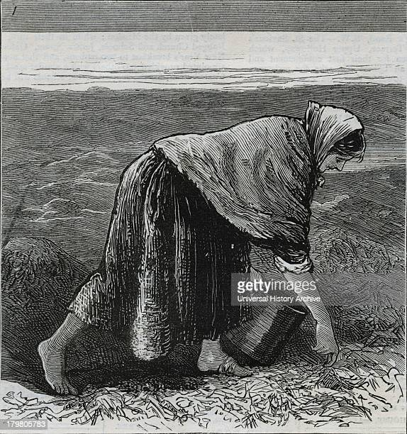 A woman on the west coast collecting seaweed