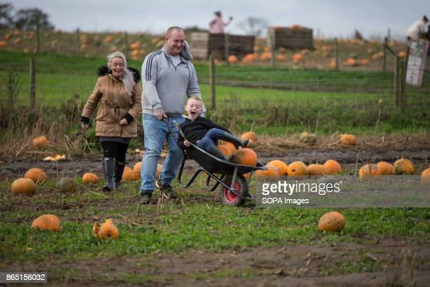 A famliy is seen while searching for their favourite pumpkin in the farm during the pumpkin festival Pumpkin market is one of the exiting things...