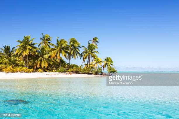 famous beach on one foot island, aitutaki, cook islands - oceano pacífico - fotografias e filmes do acervo