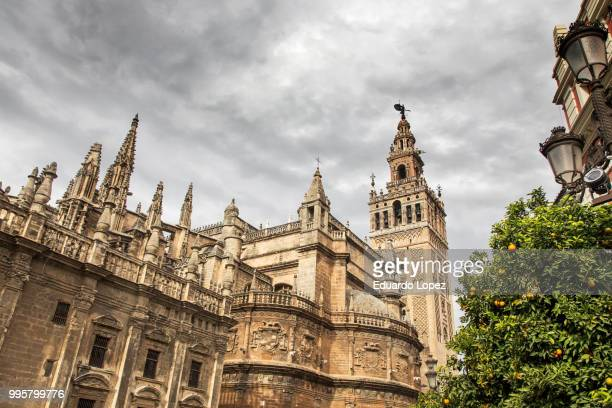 famous cathedral and giralda in seville in spain - lopez stock pictures, royalty-free photos & images