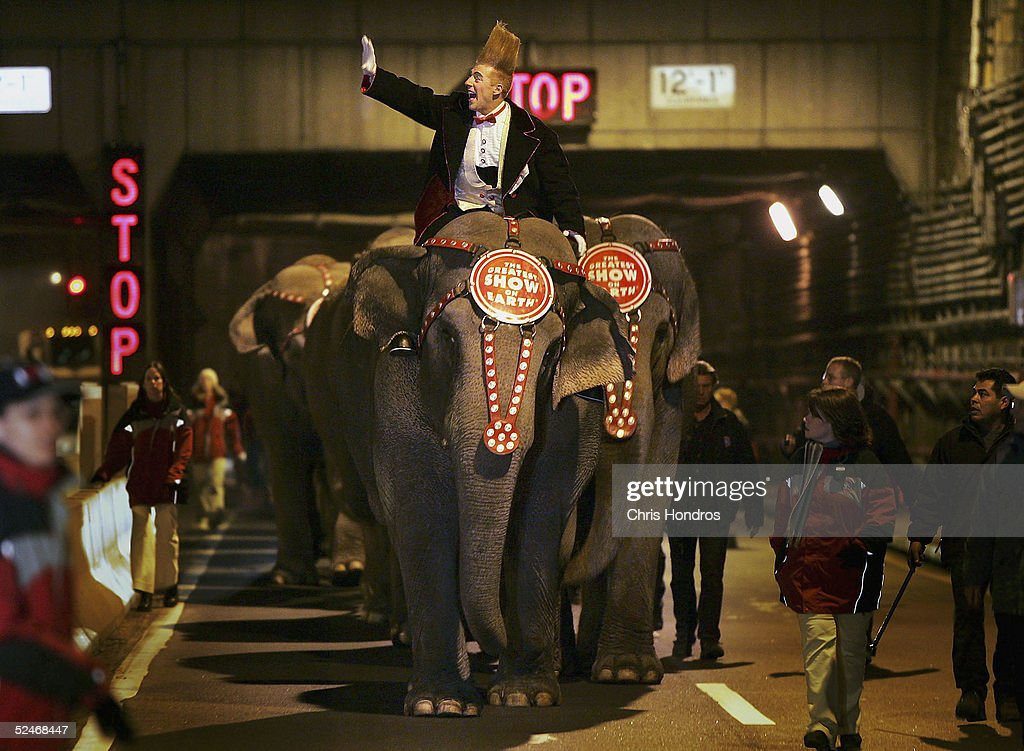 Famous clown Bello Nock waves atop an elephant from the Ringling Bros. and Barnum and Bailey circus as they emerge from the Midtown Tunnel March 23, 2005 in New York. The elephants, walked through the tunnel into New York and made their way to Madison Square Garden despite a throng of animal rights protesters, who argue that circus elephants are mistreated.