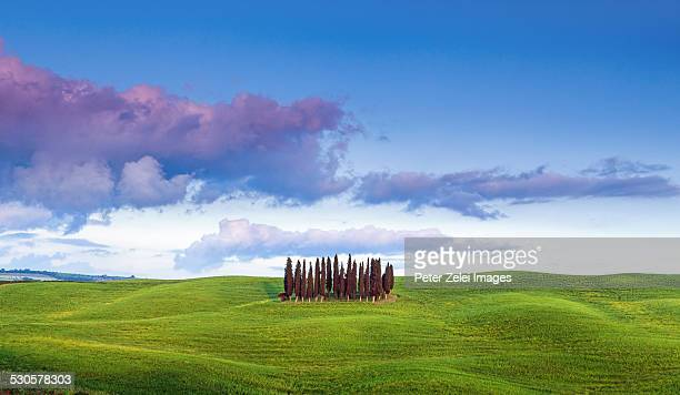 Famous cypress grove in Tuscany