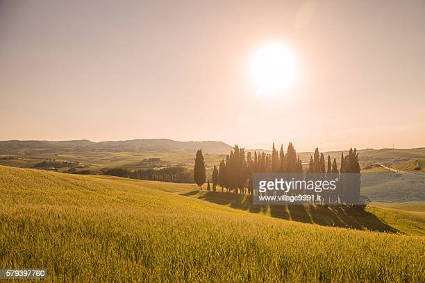 famous land mark in tuscany - san quirico d'orcia stock pictures, royalty-free photos & images