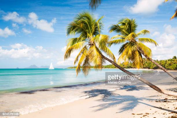 famous les salines beach in martinique caribbean - martinique stock photos and pictures