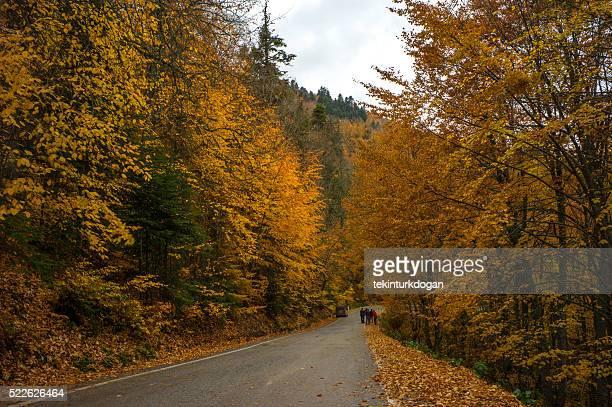 Famous natural abant lake road during autumn near bolu turkey