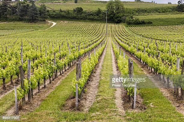 famous vinyards of saint-émillion - bordeaux wine stock photos and pictures