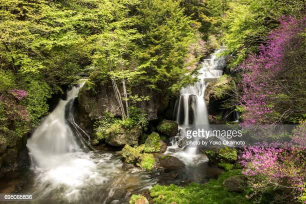 famous waterfall of nikko, ryuzo no taki - 栃木県 ストックフォトと画像