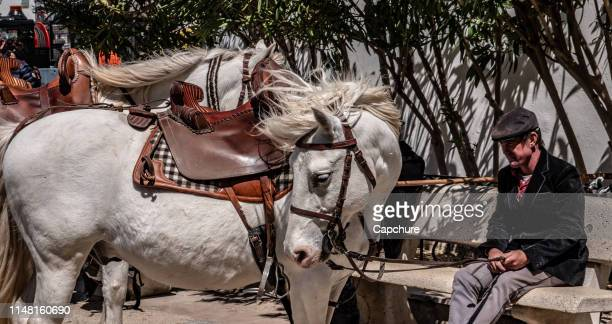 a famous white horse from the south of france. its hair blows in the mistral winds that blow down the rhone valley. the horses are famous in the carmarge region of france. - veículo terrestre pessoal - fotografias e filmes do acervo