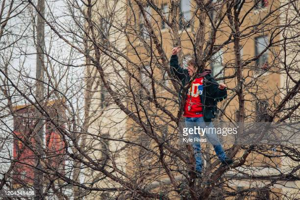 A fan cheers from a tree above the crowd before the Kansas City Chiefs Victory Parade on February 5 2020 in Kansas City Missouri